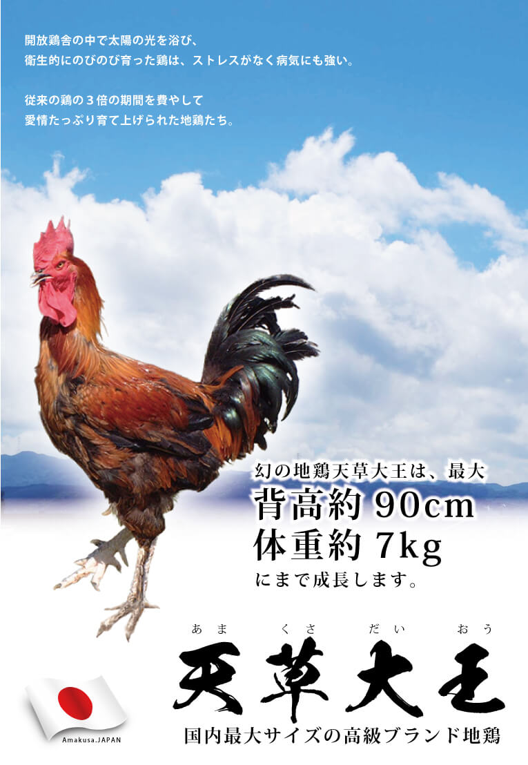 高級ブランド地鶏「天草大王」豪華詰め合わせ